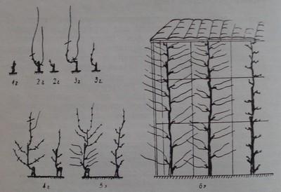 Кордон Томри - вертикален при височина на стената 2 м