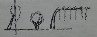 Борба срещу полярността чрез превиване на плодните пръчки