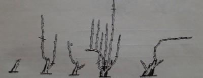 подобрен Гюйо, когато в края на първата година са се развили най-малко две силни пръчки