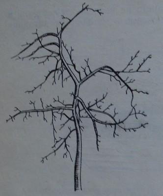 Гумена дървесина