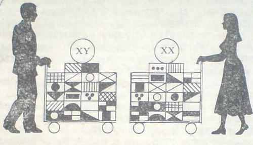 Схематично представяне на хромозомния багаж на родителите