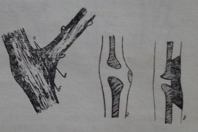 Изрязване на едногодишни пръчки