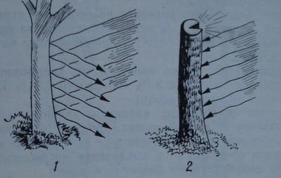 Кора, намазана с варна каша, отразява слънчевите лъчи