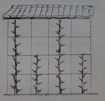 Кордон Томри - вертикален при височина на стената повече от 3 м