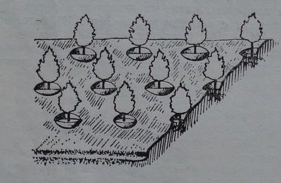 Овощни дървета, засадени на стръмни площадки