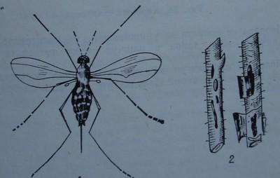 Малиново комарче