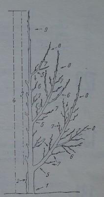 Надземни части на овощно дърво