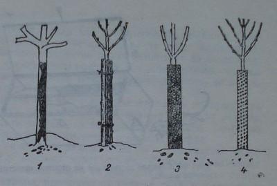 Обвиване на дръвчета за предпазване от зайци