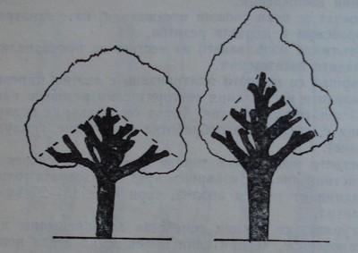 Начин за подготовка на дървета за преприсаждане
