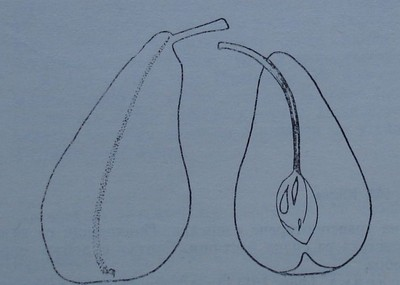 Попска круша