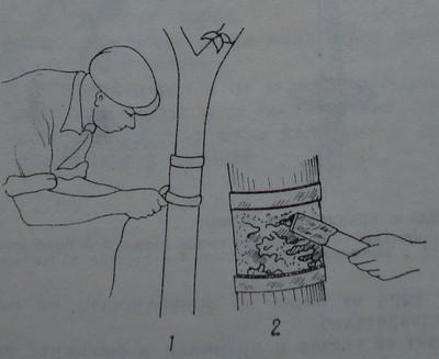 Поставяне на лепливи пояси