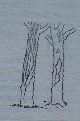 Повреди по стволовете на овощни дървета от мраз
