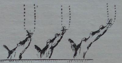 Правилно нанасяне на рани при резитбата на едно- или двегодишна дървесина