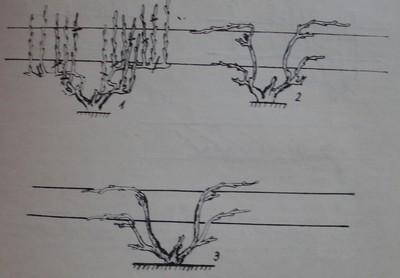 Преминаване на формировка подобрен двоен Гюйо към ветриловидна формировка с дълги рамена