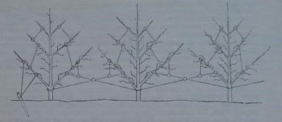 Приспособление от гумени пръстени, две жици тел и къси дървени колове
