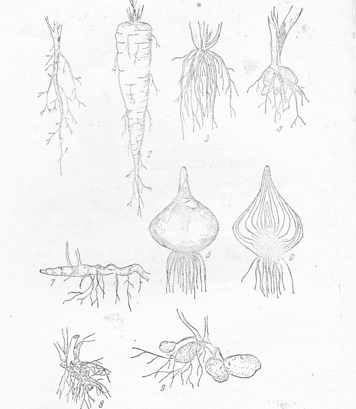 Видове подземни органи на растенията