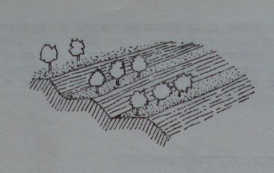 Овощни дървета, засадени на тераси Фиг. 36. Овощни дървета, засадени на тераси със с бетонни стени