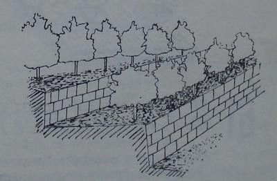 Овощни дървета. засадени на тераси