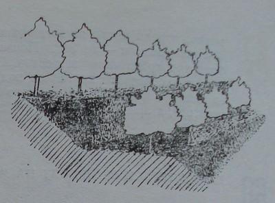 Овощни дървета, засадени на тераси със затревени откоси