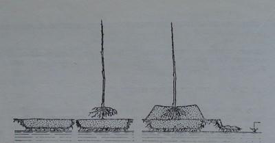 Засаждане на овощно дръвче на хълмче