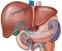 Чернодробен иктер – симптоми на автоимунното заболяване