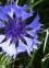 Онлайн магазините за цветя – улеснение за мъжа