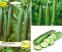 Засаждане на сортови семена краставици, отглеждане и събиране на продукцията