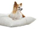 Зоопортал Baubau - информация за най-малките породи кучета