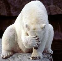 Белите мечки ще ни научат как да отслабваме!