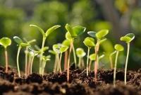 Добрата реколта се прави с добри семена