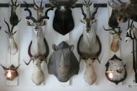 Ловни трофеи и тяхното значение