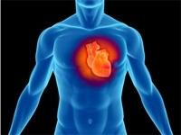 Обиколката на шията предсказва риска от сърдечни болести