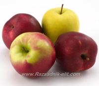 Отглеждане на ябълка- Овощен Разсадник ЕЛИТ