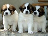 Отнасяме ли се хуманно към кучетата и като цяло към животните