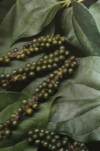 Пипер (черен, бял, дръжков и дълъг)
