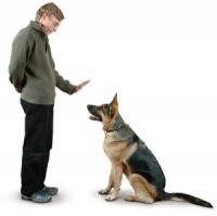 Портал за животни- как да накарате кучето си да ви слуша?