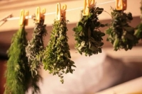 Правила за бране, сушене и запазване на билките