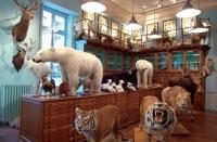 Препариране на бозайници