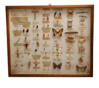 Препариране на насекоми