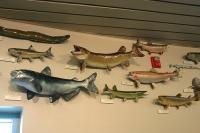Препариране на риби