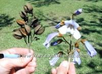 Размножаване на Пауловния (Paulownia) - Разсадници ЕЛИТ