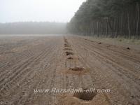 Създаване на насаждение (плантация) от Пауловния (Paulownia)