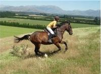 Спортния конен туризъм