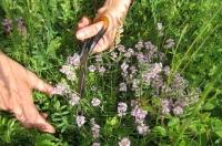 Топ 5 билки, които задължително трябва да гледате в градината си