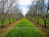 Торене на овощни дръвчета и плодни храсти - Овощен Разсадник Елит