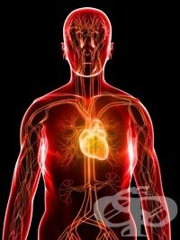 Управление на високо кръвно налягане-внимавайте с какво се храните