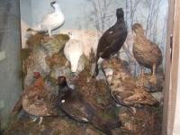 Устройство на тялото на птиците за препариране