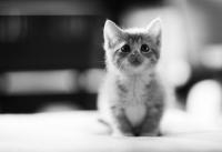 Закупуване на котка от обяви