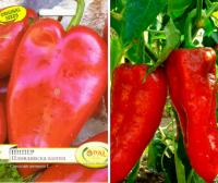 Засаждане и отглеждане на сортови семена на чушки