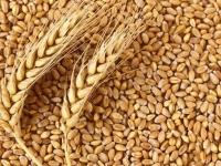 Земеделците търгуват зърно чрез интернет борси